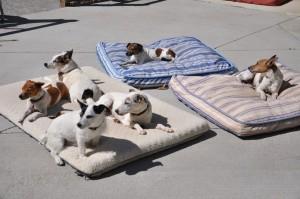 JG dogs sunning
