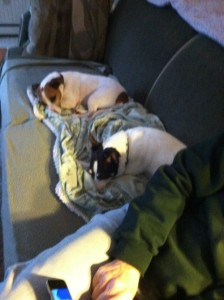 Jaimee slumbering with friend in new home