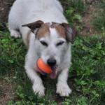 Simon has Jackee's ball
