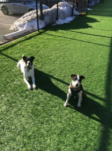 Oreo, right, with play pal, adopted