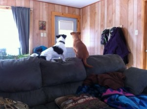 Patches, left adopted, and his pal Sadie, have prime real estate!