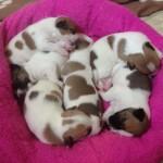 even puppies got homes