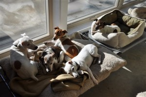 Pillow pile in favorite sun spot