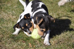 Lok and Dino two pups who found their forever homes