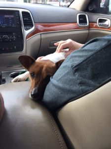 After the vet, tired on mom's lap