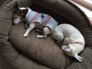 Tator, left, cuddles with sanctuary jack Mack