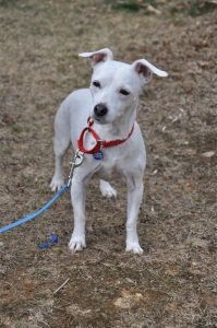 Nina Treated for seizures and a B12 deficiency, now healed and ready to be adopted