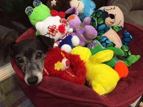 JG Leebs in a bed of Glad Dogs Nation toys